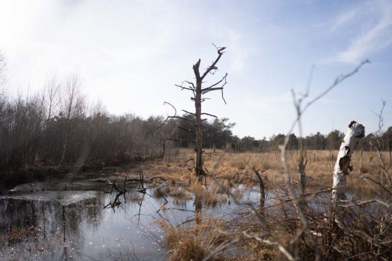 Großes Moor bei Bokel